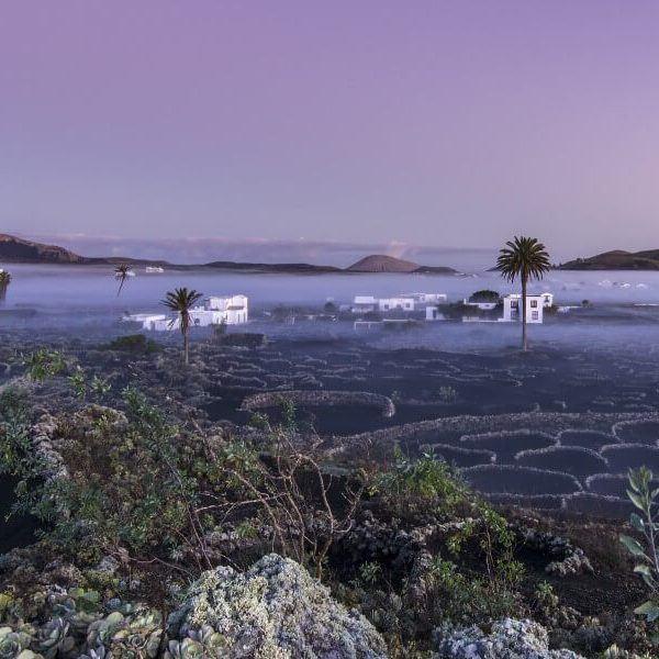 Excursion spotlight: Lanzarote Wine Tours