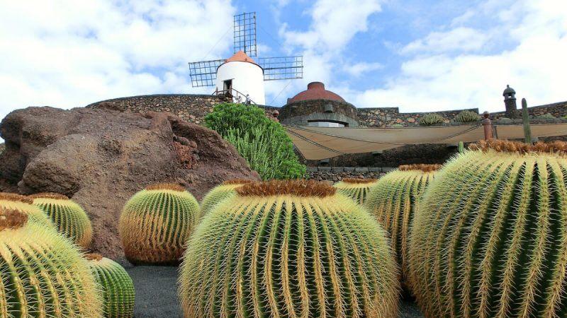 Cactus Garden must visit in Lanzarote Club Las Calas