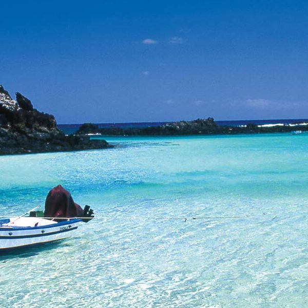 Relaxing day trip to the Isla de Lobos